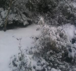 winter journey snow pic